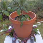 Image for Tree Planting Ceremony With a Twist!