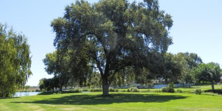 Oak Farm Vineyards: Lodi Wedding Venue
