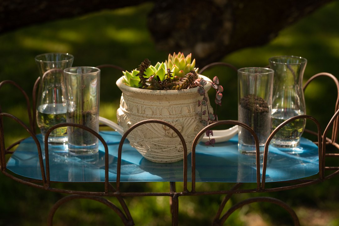 succulents, potted plant, garden, wedding, The Freckled Photographer, Gold Hill Gardens, 2019 Weddings